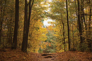 Lauriault Trail at the Mackenzie King Estate in Gatineau Park. Source: NCC